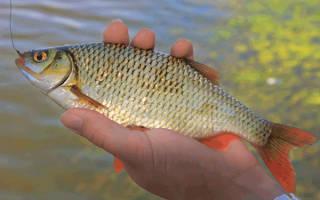 Рыбалка в апреле — что да как…