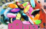 Мультипликаторная катушка Shimano 12 Antares L — обзор и отзывы
