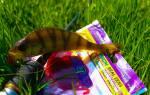 Мягкая приманка Kosadaka Trail Worm (5 см) — обзор и отзывы