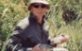 Леска Balsax Iguana 0.35 — обзор и отзывы